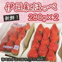 【ふるさと納税】005-004 新鮮いちご!伊豆紅ほっぺ(2