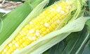 【ふるさと納税】遠州森町産トウモロコシ