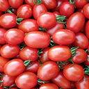 【ふるさと納税】高糖度!完熟ミニトマト ゴールデンスイーツ1kg