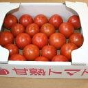 【ふるさと納税】とっても甘〜い!川助農園のフルーツトマト1.5kg以上(最大糖度15.3度!!)