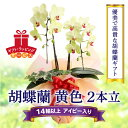 【ふるさと納税】胡蝶蘭 黄色 2本立14輪以上 アイビー入り...