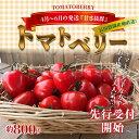 【ふるさと納税】4月〜6月の発送 甘さ抜群!!トマト嫌いも食...