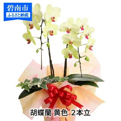 【ふるさと納税】胡蝶蘭 黄色 2本立14輪以上 アイビー入り H042-001