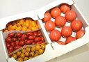 【ふるさと納税】水耕栽培トマト