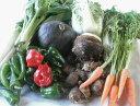 【ふるさと納税】農薬をいっさい使わず栽培した季節の野菜詰め合...