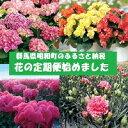 【ふるさと納税】【年間5回お届け】明和町の季節の花いろどりセット