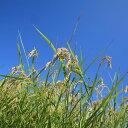 【ふるさと納税】平成29年産新米!環境こだわり農産物 低農薬...