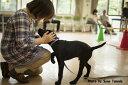 【ふるさと納税】盲導犬訓練支援寄付?「行きたい場所に、安心していける社会に…」?(100,000円)