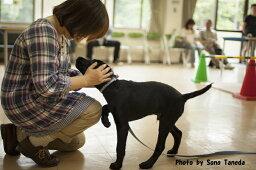 【ふるさと納税】盲導犬訓練支援寄付〜「行きたい場所に、安心していける社会に…」〜(10000円)