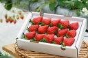 【ふるさと納税】[数量限定]幻の京都亀岡産 高級 苺 いちご...