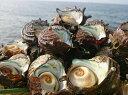 【ふるさと納税】日本海天然・さざえ2kg