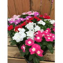 【ふるさと納税】225:伊川谷町産の季節の花壇苗「生産者おまかせセット」
