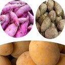 【ふるさと納税】加西市産の贅沢な3種の芋セット(里芋・紫芋・...