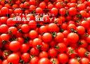 ショッピングトマト 【ふるさと納税】アグリミュージアムNADA 校庭トマト 2kg