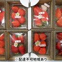 【ふるさと納税】藤井悦雄さん生産のいちご8パック 【ジャム・...