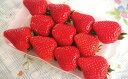 【ふるさと納税】イチゴ(あすかルビー) 【果物類・フルーツ・...