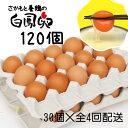 【ふるさと納税】さかもと養鶏の白鳳卵120個(30個入×全4回配送)