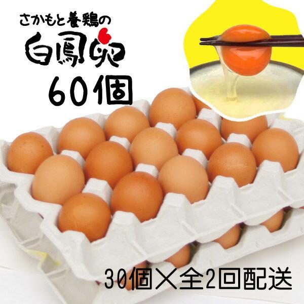 【ふるさと納税】阪本エッグファームの白鳳卵60個(30個入×全2回配送)