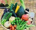 【ふるさと納税】産地直送!新鮮とれたて夏野菜セット