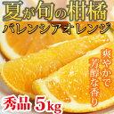 【ふるさと納税】秀品 希少な国産バレンシアオレンジ 5kg