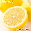 【ふるさと納税】【産直】和歌山産レモン約3kg(サイズ混合)