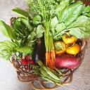 【ふるさと納税】農薬、化学肥料、家畜肥料不使用 根っこ農園 ...