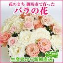 【ふるさと納税】バラの花 約20本 花のまち御坊産の薔薇 生産者から新鮮直送