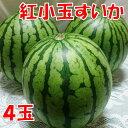 【ふるさと納税】紅小玉すいか(ひとりじめ7)4玉...