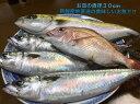 【ふるさと納税】御坊産 鮮魚セット2.5kg 鮮魚 天然 詰...