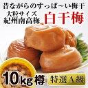 【ふるさと納税】紀州南高梅 特選A級 白干梅(梅干し)10kg[無添加]