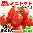 【ふるさと納税】完熟 ミニトマト(アイコ)約2kg トマト農...