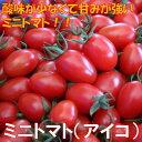 ふるさと納税ミニトマト(アイコ)2kg