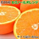 【ふるさと納税】和歌山有田産セミノールオレンジ約5kg(サイズ混合) ※2021年4月下旬〜5月中旬頃に順次発送予定