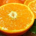 【ふるさと納税】セミノールオレンジ 約6kg【サイズおまかせ】【お届け日指定不可】紀伊国屋文左衛門本舗