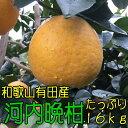【ふるさと納税】有田育ちの河内晩柑 16kg【お届け日指定不...