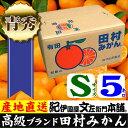 【ふるさと納税】田村みかん/5キロ青秀【Sサイズ】紀州和歌山...