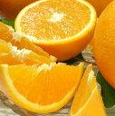 【ふるさと納税】バレンシアオレンジ[約7kg]和歌山県産(無...