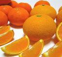 【ふるさと納税】有田育ちの濃厚柑橘詰め合わせセット 約7.5kg ◆※平成31年1月下旬頃より順次発...