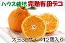 【ふるさと納税】甘みも果汁もたっぷりのハウス栽培3Lサイズの...