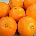 【ふるさと納税】木熟ネーブル[約10kg]和歌山県産木熟シリ...