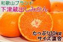 【ふるさと納税】[和歌山ブランド]下津の蔵出しみかん たっぷ