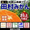 【ふるさと納税】有田みかんの最高峰【和歌山ブランド】人気の田...
