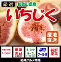 【ふるさと納税】≪和歌山県産≫いちじく たっぷり4パック 紀...
