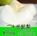 【ふるさと納税】二十世紀梨 約5kg ◆※8月下旬頃〜9月中...