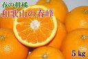 【ふるさと納税】和歌山で生まれた春にぴったりの柑橘「春峰」約...