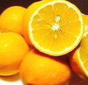 【ふるさと納税】湯浅町産 国産レモン 約5キロ サイズおまかせ※2月中旬頃〜3月下旬頃に順次発送予定