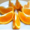 【ふるさと納税】バレンシアオレンジ 5kg サイズおまかせ(...