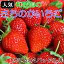 【ふるさと納税】(人気)和歌山産さちのかいちご約250g×4...
