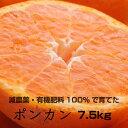 【ふるさと納税】[特別栽培] ポンカン7.5kg【発送時期指定可】【有機肥料100%・減農薬栽培の春みかんを農家直送】