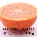 【ふるさと納税】特別栽培 セミノールオレンジ10kg  【発...